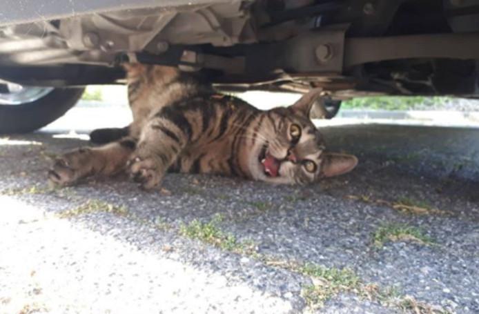 Met veel moeite werd de kat Japie uit zijn benarde positie bevrijd.