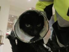 Kitten komt met kop in glazen pot vast te zitten en valt in vijver in Waalre, bevrijd door dierenambulance