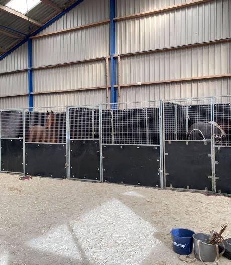 Twee paarden overleden na virusuitbraak in stalhouderij Lelystad: 'Dit is onze grootste nachtmerrie'