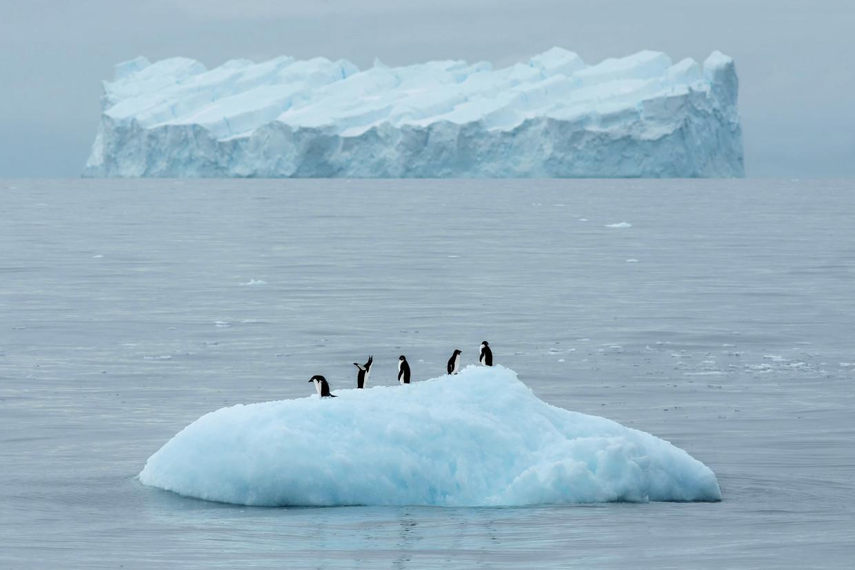 Pinguïns op een ijsschots op Antarctica.