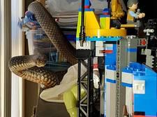 Levensgevaarlijke slang terroriseert LEGO-bouwwerk van jongetje