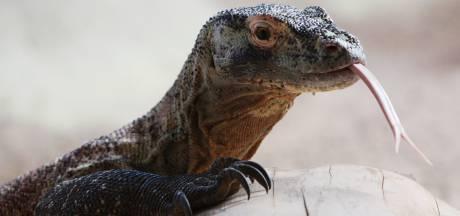 Politie neemt hele reeks exotische dieren in beslag na melding over geurhinder