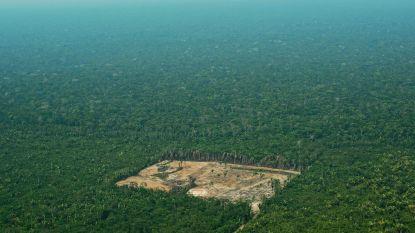 Frankrijk verbiedt alle producten uit ontbossing
