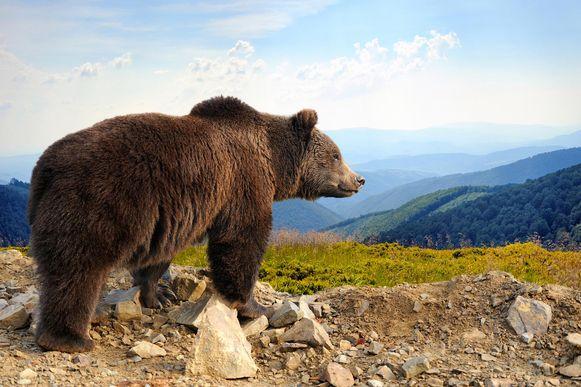 Een beer.
