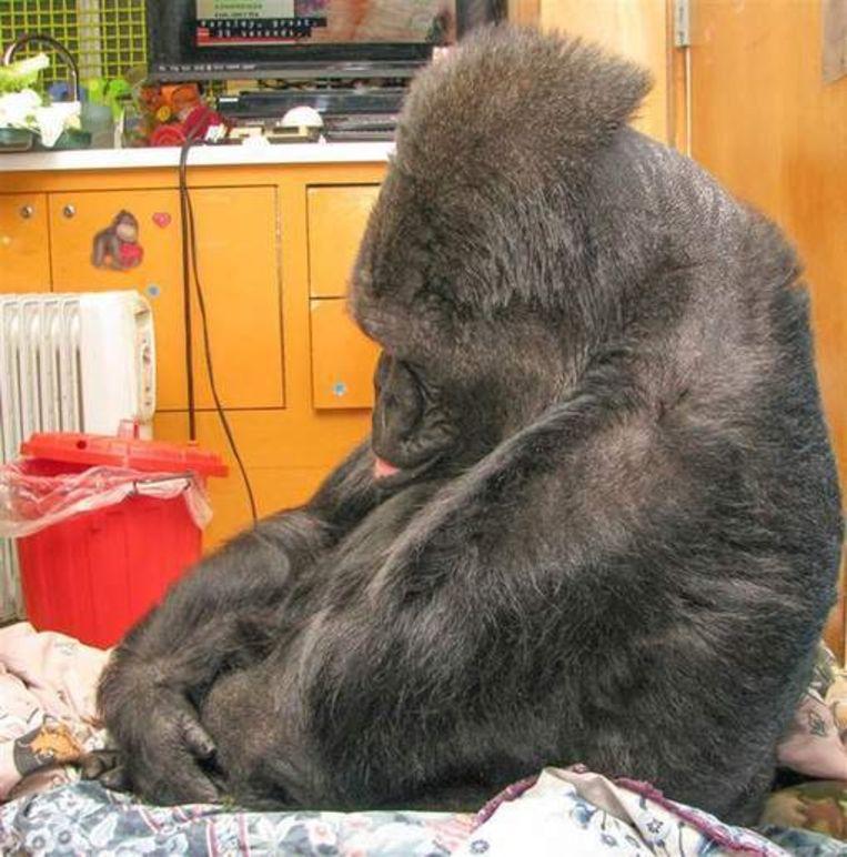 Koko werd extreem verdrietig toen ze hoorde dat Robin Williams overleden was.