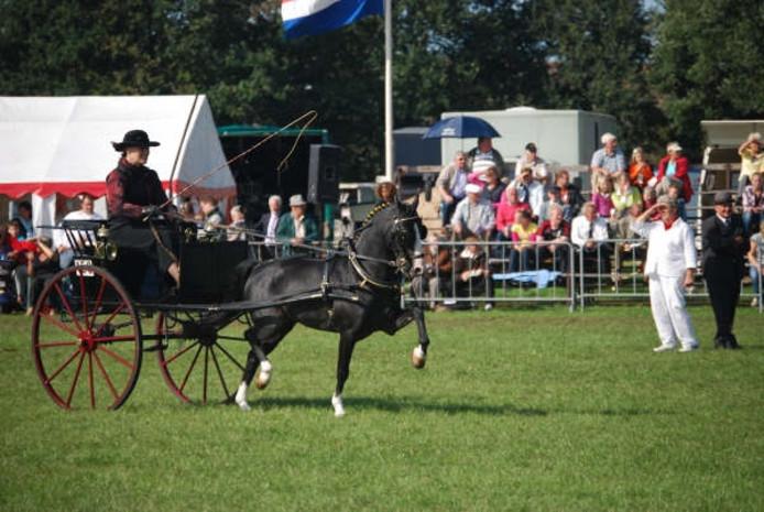 Tuigpaardenwedstrijd