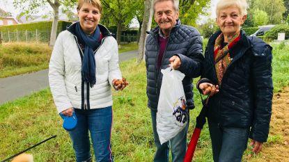 Er valt wat te rapen aan het Notelaarspad: Hofstadenaren vullen zakken met walnoten