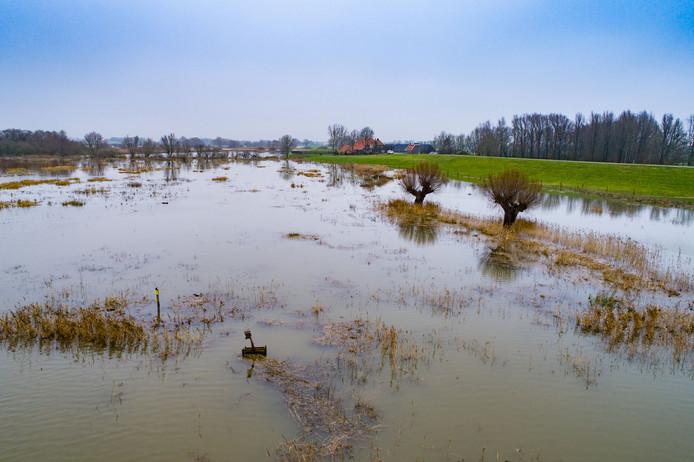 Hoog water bij de Vreugderijkerwaard ten westen van Zwolle aan de noordoever van de rivier de IJssel.