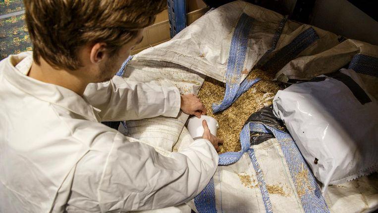 Zakken vol vezels, zoals dit versnipperde riet, liggen klaar voor de experimentele mengsels biocomposiet. Beeld Carly Wollaert