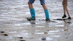 'Orgie' van oesters in Texelse haven kleurt zeewater wit