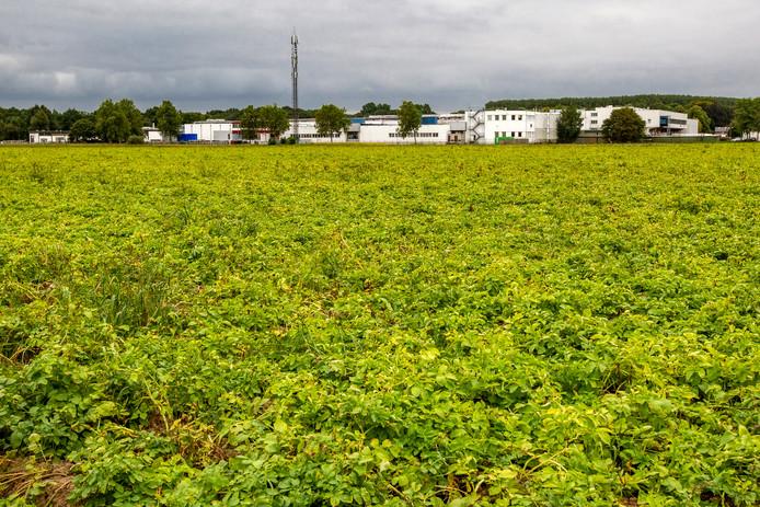 Op de Noordmanshoek in Wijhe is een zonnepark gepland. Foto ter illustratie.