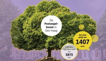 Bomen leven de samenleving niet alleen zuurstof op, maar ook keiharde euro's