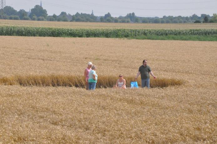 'Ontdekker' Robebrt van den Broeke in de graancirkel aan de Palingstraat in Hoeven.