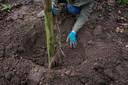 In de breedte vinden de wortels meer stabiliteit, en een luchtiger en voedzamer bodemlaag
