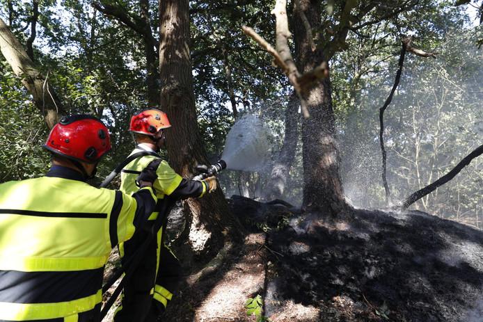 De brandweer kon een grotere bosbrand voorkomen.