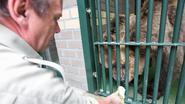 Natuurhulpcentrum vangt beren uit Albanië op