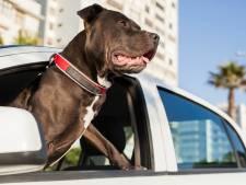 Drogué, il apprend à conduire à son chien et ça finit en course-poursuite