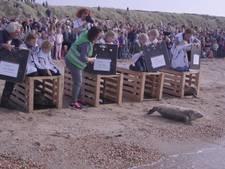 Zeehondjes uitgezet in Ouddorp