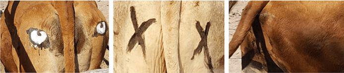 Ogen op een koe geschilderd. Radford et al. (2020)