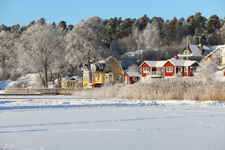 Bolderburen in de Zweedse sneeuw  Beeld Getty Images/iStockphoto