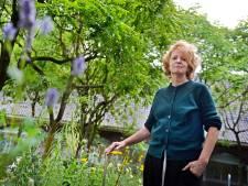 Zoektocht naar Twents blauw: Claudy Jongstra verandert binnentuin Rijksmuseum in een bloemenzee