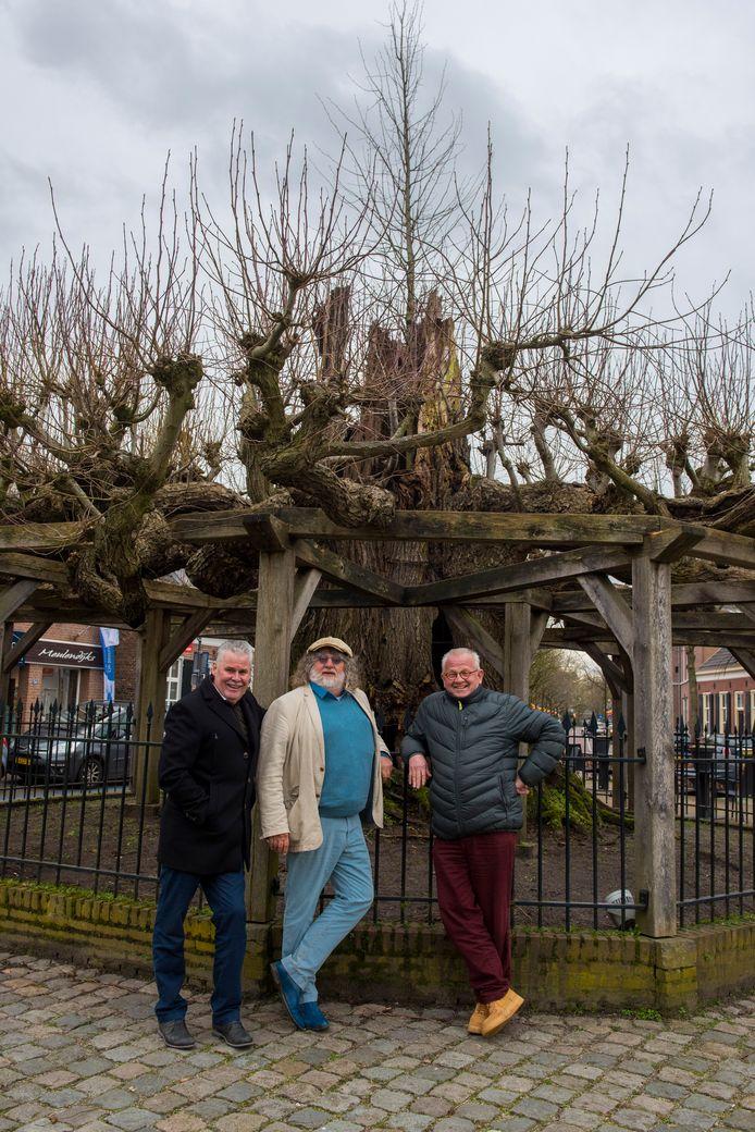 De oud-prinsen Vincent Raessens, Fons Linders en Jan Wesenbeek (vlnr) bij de oude lindeboom aan de Berg in Nuenen. Boven de oude linde is de nieuwe boom te zien.