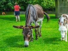 Nijpend tekort aan vrijwilligers bij kinderboerderij Gennep