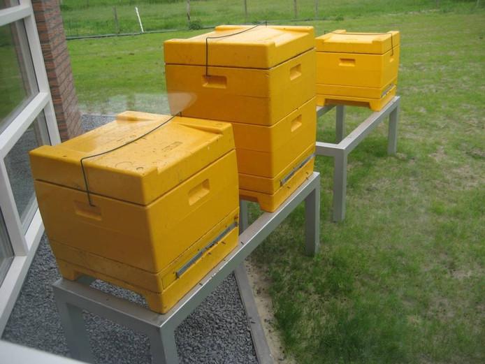 Enkele van de 200 bijenkasten van de Imkerij Ecopoll.