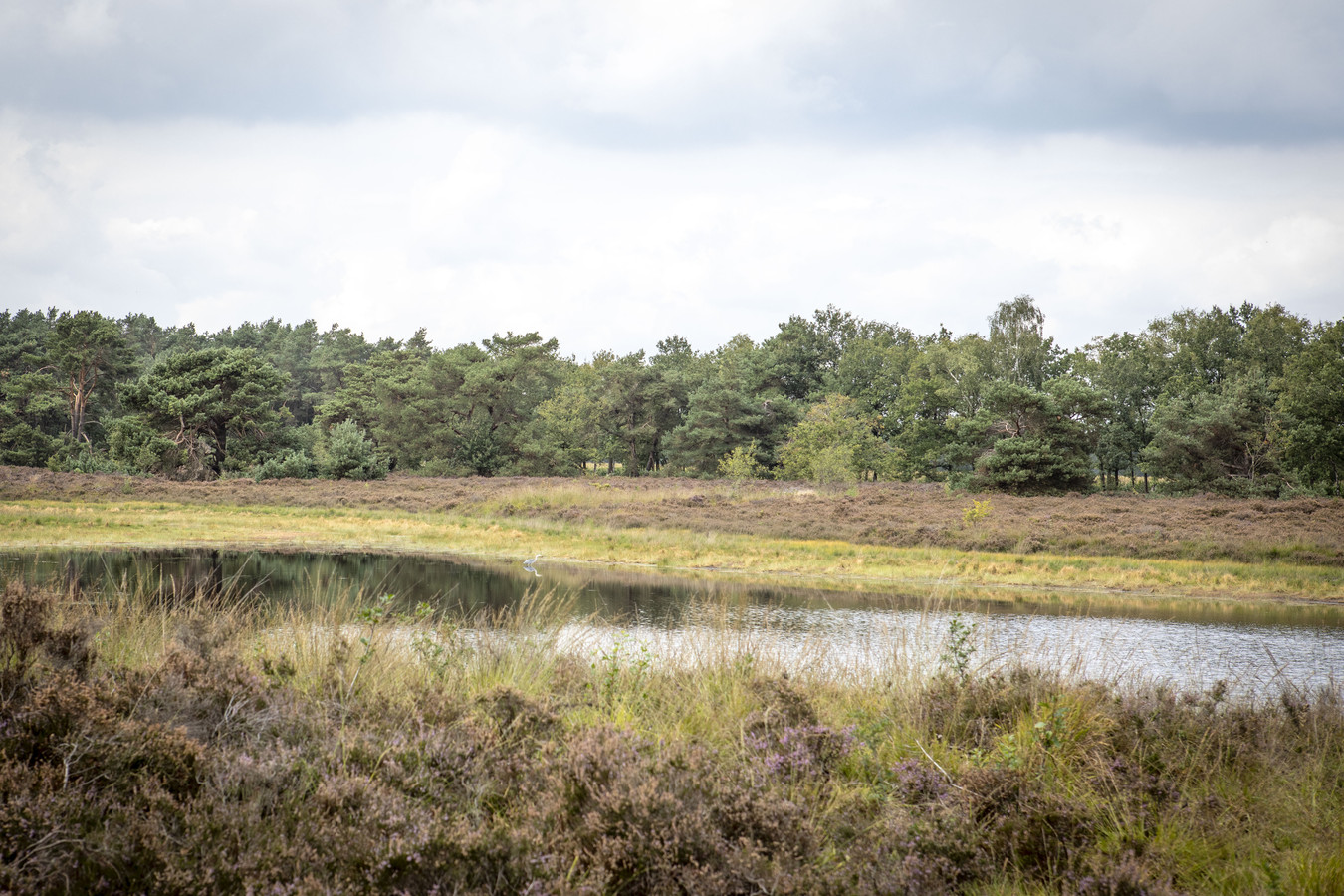 Natuurgebied De Bergvennen bij Lattrop.