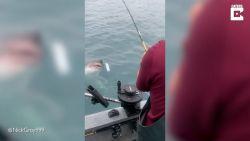 Visser heeft onverwachte vangst tijdens het vissen op zalm