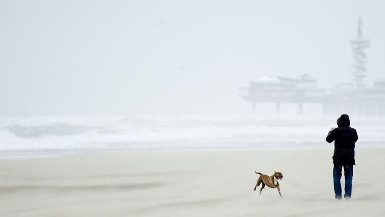 Dappere man trotseert storm met hond Beeld anp