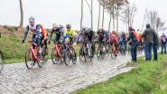 """Flink wat supporters voor Omloop over de kasseien van de Haaghoek: """"We trotseren guur weer, maar krijgen koers ook drie keer te zien"""""""