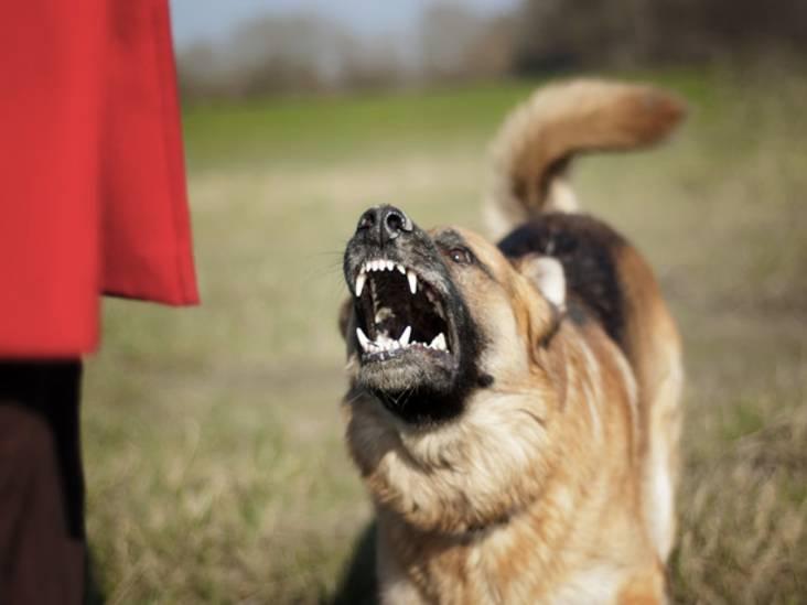 Het CDA opent de jacht op bijtgrage honden en hun baasjes