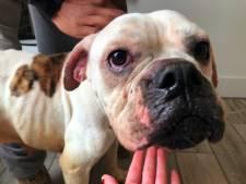 Deventer stichting redt verwaarloosde honden in huis Oldebroek: 'Had geen drie dagen langer moeten duren'