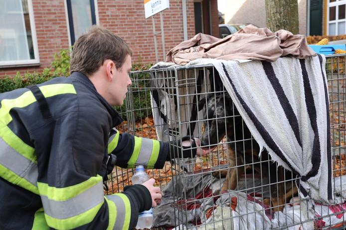 Honden gered uit woning