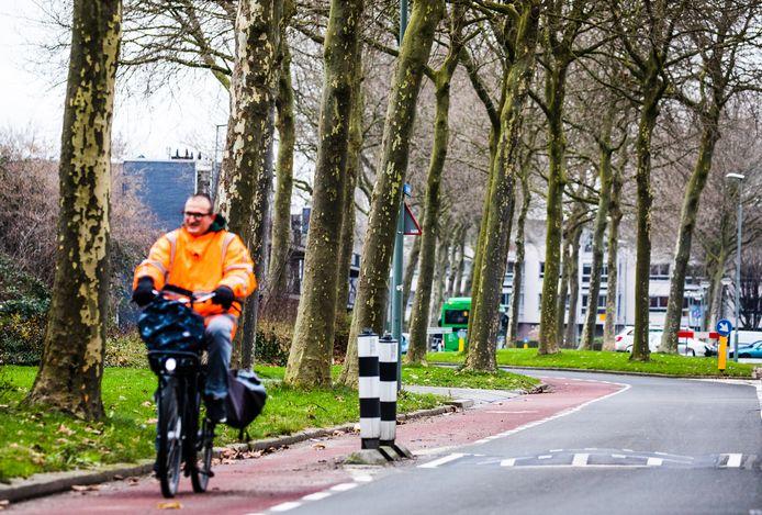 De platanen aan de Stadspolderring in Dordrecht.