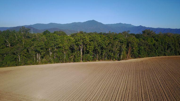 Het ontbossen van de Amazone voor de veehouderij is het grootste bezwaar van de activisten. Beeld Shutterstock