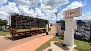 """Brazilië exporteerde jarenlang """"rot"""" vlees"""
