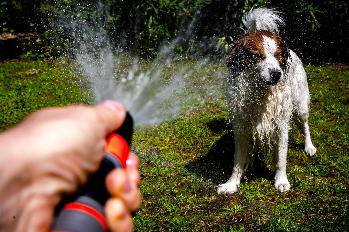 In tegenstelling tot katten, is de vacht van een hond wel waterafstotend
