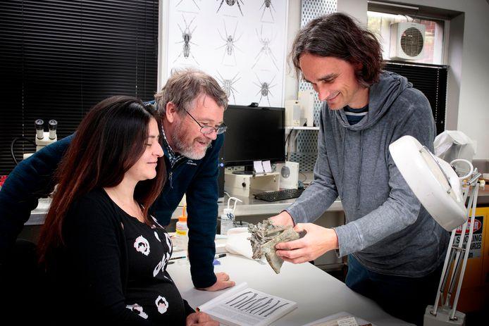 Les chercheurs observent le fossile au Musée de Canterbury, le 14 août 2019