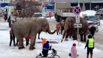 Ontsnapte circusolifanten gaan op wandel door sneeuw in Rusland