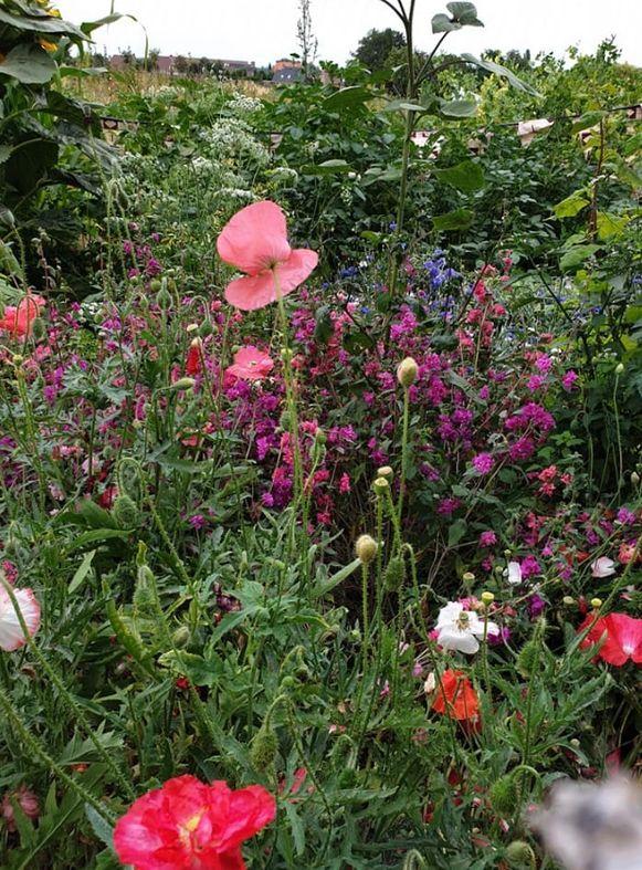 De bloemenweide van Tannekes Tuin.