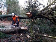 Stormschade leidt tot veel snoeiwerk in regio Amersfoort