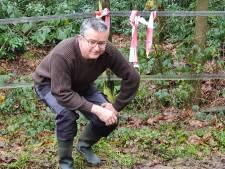 Wolf gespot in Esbeek: sporen in de paardenwei, veulen blijft voorlopig binnen
