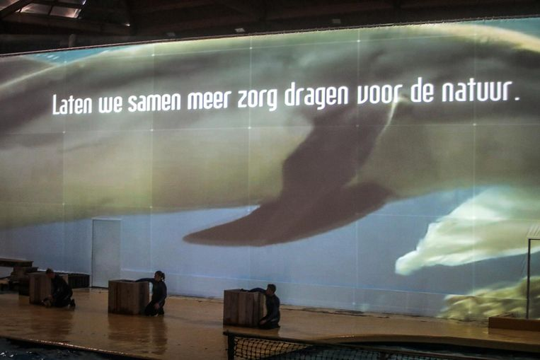 Op een groot projectiescherm vraagt Boudewijn Seapark aandacht voor de bedreigde soort.
