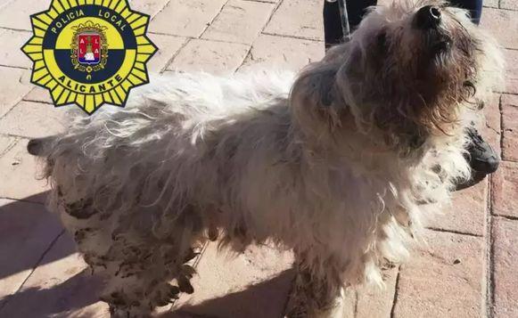 Een van de 36 geëvacueerde honden.