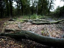 Opinie: de prachtige Leersumse bossen veranderen in schrikbarende kaalvlaktes