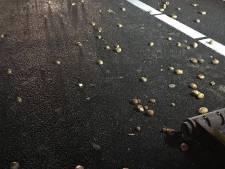 Chaos op A50 door vrachtwagen die lading aardappelen verliest: vertraging neemt af