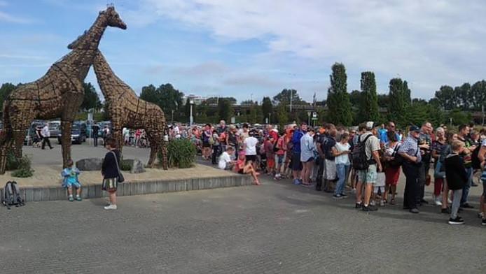 De leeuwen staan massaal te wachten tot ze de dierentuin in mogen.