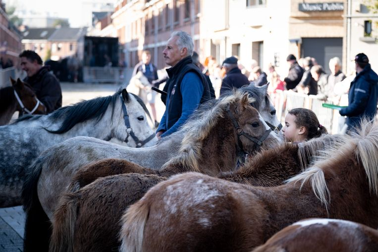 Pony's op de 171ste Jaarmarkt in Willebroek.